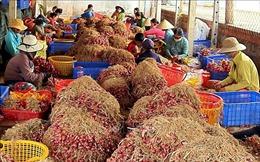 Đề xuất giải pháp hỗ trợ sản xuất, tiêu thụ nông sản