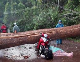 Lốc xoáy quật đổ cây cổ thụ ở Lâm Đồng, một phụ nữ đi xe máy tử vong
