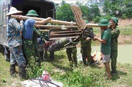 Trục vớt, di dời an toàn hai quả bom tại huyện Tiên Lữ