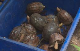 Phát hiện nhân viên đường sắt vận chuyển 17 cá thể rùa quý hiếm