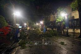 Hà Nội: Khẩn trương thu dọn cây xanh bị gãy, đổ sau trận mưa lớn