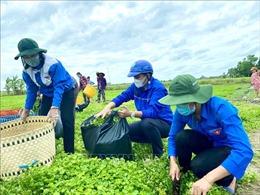 Dấu ấn tình nguyện của tuổi trẻ Việt Nam trên mặt trận chống dịch COVID-19