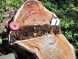 Khởi tố bị can, bắt tạm giam 5 đối tượng trong vụ phá rừng lớn nhất ở Hà Giang