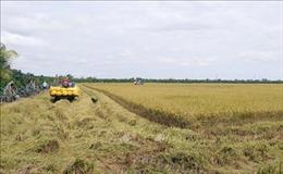 Đồng Tháp: Thu hoạch lúa an toàn trong điều kiện phòng dịch COVID-19