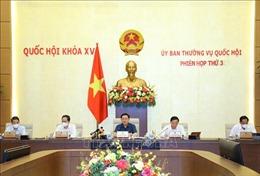 Uỷ ban Thường vụ Quốc hội cho ý kiến về Báo cáo của Chính phủ về thi hành Hiến pháp, luật, nghị quyết