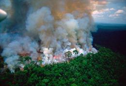 Hậu quả khủng khiếp của cháy rừng Amazon