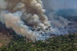 Giới chuyên gia: Thế giới đang đưa hàng loạt thông tin sai lệch về cháy rừng Amazon