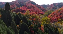 Ngắm rừng thu khoác áo đỏ đẹp mê hồn