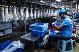 Mỹ cấm nhập khẩu của tập đoàn sản xuất găng tay phẫu thuật lớn nhất thế giới