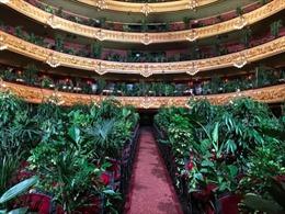 Kỳ lạ buổi hòa nhạc mà khán giả là cây cảnh ở Barcelona