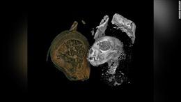 Khám phá xác ướp động vật Ai Cập bằng công nghệ quét 3D