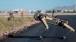 Chó robot tham gia tập trận cùng Không quân Mỹ