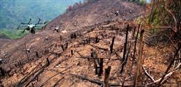 Máy bay không người lái Mỹ rải hạt giống, trồng lại rừng bị cháy