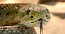 Phát hiện mới: Mắc COVID-19 thể nặng giống bị rắn độc cắn