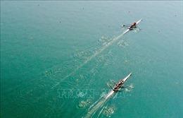 Rowing giành vé dự Olympic Tokyo thứ 7 cho thể thao Việt Nam