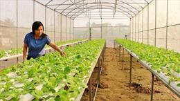 Ứng dụng công nghệ cao nâng giá trị nông sản Việt