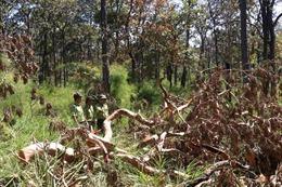 Tây Nguyên vẫn là 'điểm nóng' về phá rừng
