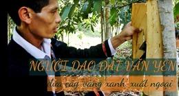 Người Dao đất Văn Yên đưa cây 'vàng xanh' xuất ngoại