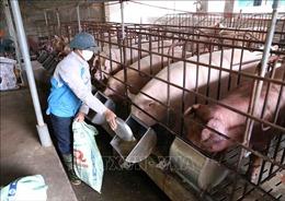 6 'bí quyết' chăn nuôi lợn an toàn sinh học