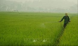 Những biện pháp khẩn để bảo vệ lúa Đông Xuân ở các tỉnh phía Bắc