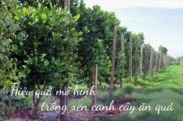Hiệu quả mô hình tái canh cà phê trồng xen cây ăn quả ở Đắk Lắk