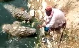 Rùng mình xem người đàn ông ngồi giữa bầy 5 con cá sấu đói ăn