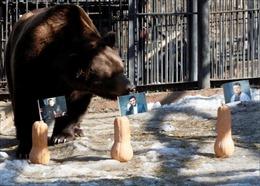 Gấu Nga dự đoán kết quả bầu cử tổng thống Ukraine