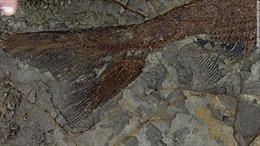 Nghĩa địa hóa thạch hé lộ ngày hầu hết sự sống Trái đất bị xóa sổ