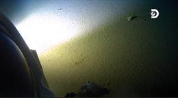 Phát hiện rác thải nhựaở độ sâu 11km dưới đáy Thái Bình Dương