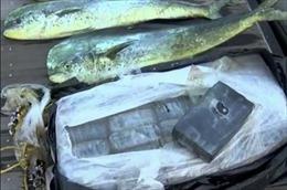 Vớt được bọc cocaine hàng chục cân nhờ phát hiện cá 'phê thuốc'
