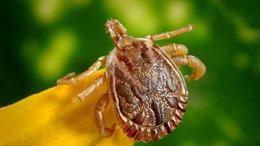 Lầu Năm Góc bị nghi bí mật vũ khí hóa côn trùng