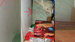 Con trai tìm thấy xác trẻ nhỏ trong tủ lạnh của mẹ