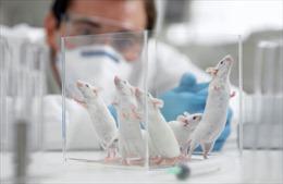 Nhà khoa học Nhật Bản'nuôi' nội tạng người trong cơ thể động vật