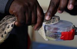 Kenya nghiên cứu phương pháp trị rắn độc cắn