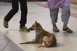 Đàn chó hoang lẻn vào bệnh viện, cắn tử vong bé sơ sinh