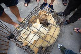 Ngăn virus Corona lây lan, thành phố Trung Quốc cấm ăn thịt chó, mèo