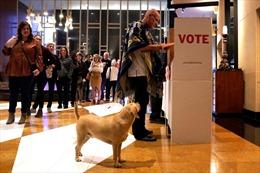 Cử tri Mỹ xếp hàng bỏ phiếu trong ngày Siêu thứ Ba
