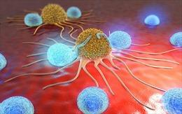 Các chuyên gia Nhật Bản huấn luyện giun phát hiện bệnh ung thư