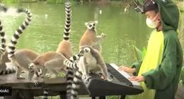 Vắng khách, vườn thú Thái Lan cho động vật nghe nhạc sống để thư giãn