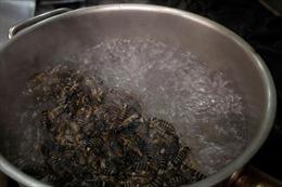 Nhà hàng Mỹ phục vụ món ăn từ loài côn trùng vừa ngủ đông 17 năm