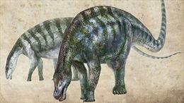 Phát hiện loài khủng long rồng tại Trung Quốc