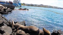 Sự cố tràn dầu ở quần đảo đẹp nhất thế giới