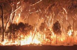 Lượng CO2 từ cháy rừng ở Australia tương đương thảm họa cháy rừng Amazon