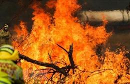 Australia chi 50 triệu AUD khắc phục thảm họa cháy rừng