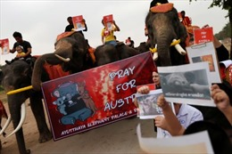 Voi buồn bã trong lễ diễu hành tưởng niệm động vật chết do cháy rừng Australia
