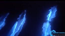 Kỳ diệu cảnh tượng cá heo 'phát sáng' nhảy múa dưới biển đêm