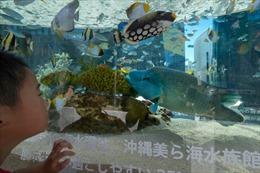 Lo cá quên con người, thuỷ cung kêu gọi khách trò chuyện cùng cá qua video