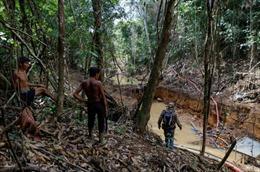 'Cơn sốt' vàng Amazon đe dọa sự sinh tồn của bộ lạc lớn nhất Brazil