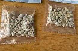 Trung Quốc phản hồi thông tin hạt giống bí ẩn được gửi đến Mỹ