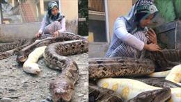 Cô bé 14 tuổi nuôi 6 con trăn khổng lồ, chăm sóc như thú cưng
